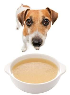 kedi ve köpekler için kolajen kaynağı ilikli dana kemiği suyu