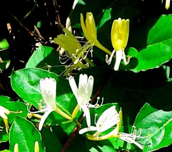 Такие цветы растут во дворе дома, где я жил (Махмутлар ...