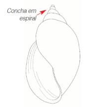 caracóis