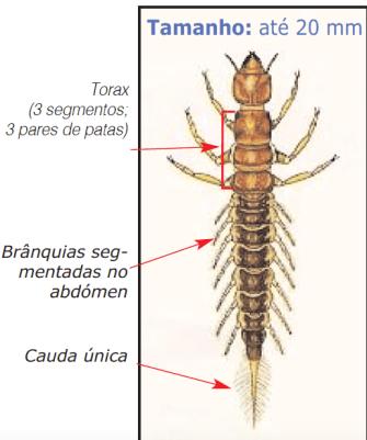 larva Sialis