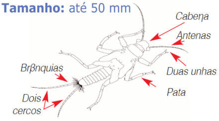 larva moscas das pedras