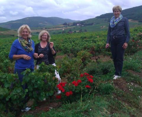 Dans le vignoble beaujolais