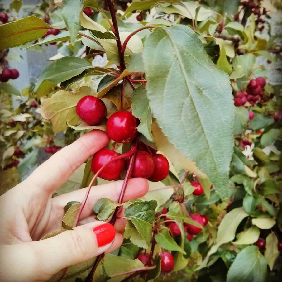 Яблочный Спас 2017: история праздника