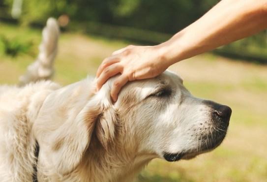 Избавления от стресса без лекарств: проводим время с кошками и собаками.