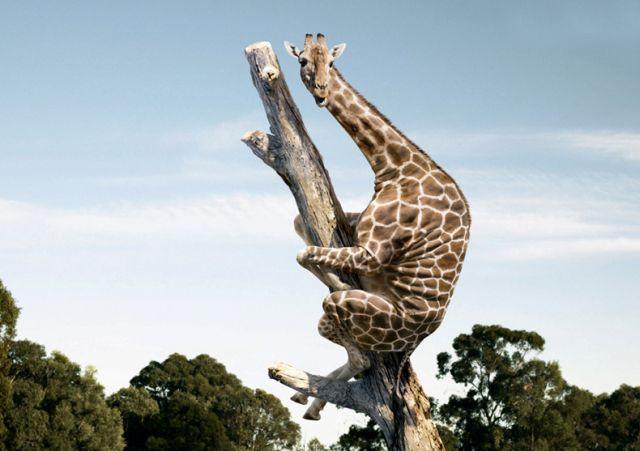 https://i1.wp.com/izismile.com/img/img2/20090731/funny_giraffe_25.jpg