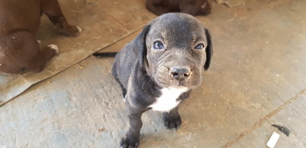 Boru içine sıkışan yavru köpek kurtarıldı