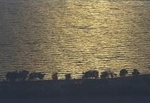 Galileai tenger