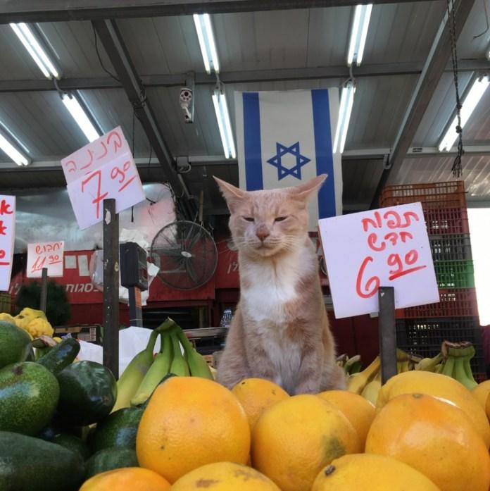izraeli zaszlo piac macska cica narancs avokado