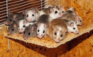 egerek Illusztráció - fotó: Pixabay