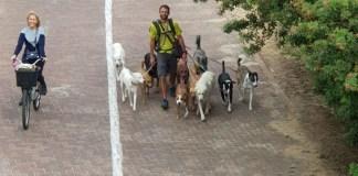 Tel-Avivban az emberek a határozott közlekedés hívei
