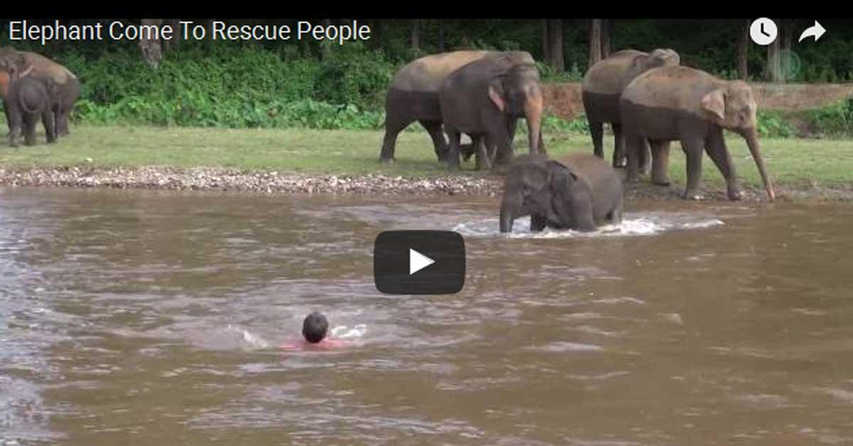 Video dana: Kad slon misli….