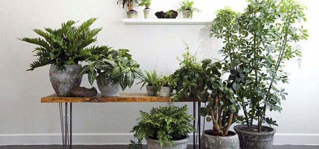 Kućne biljke koje doprinose detoksikaciji zraka