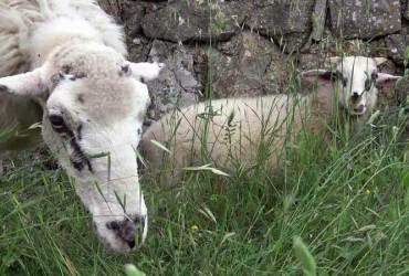 Muzej ovčarstva Lubenice cres