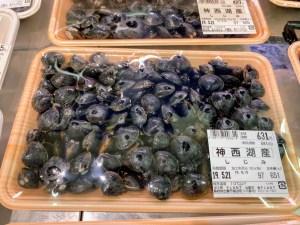 """出雲2.0のスタッフブログ""""シジミ対決"""""""
