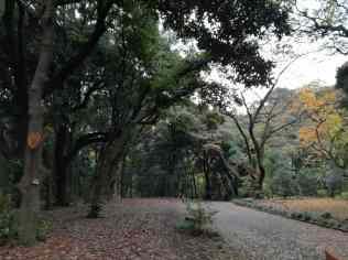 Pretty park in Shinjuku