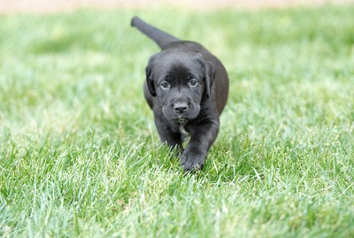 Chiot dans l'herbe