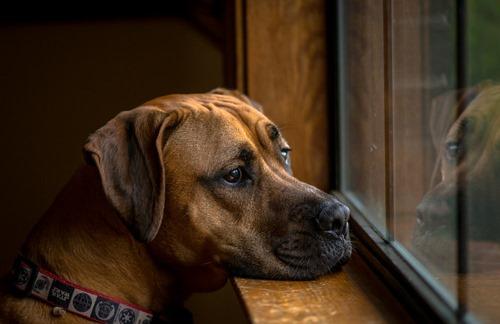 Un chien qui s'ennuie développe des mauvais comportements