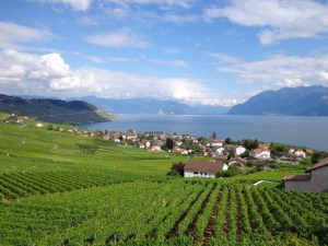 vineyards-along-lake-geneva