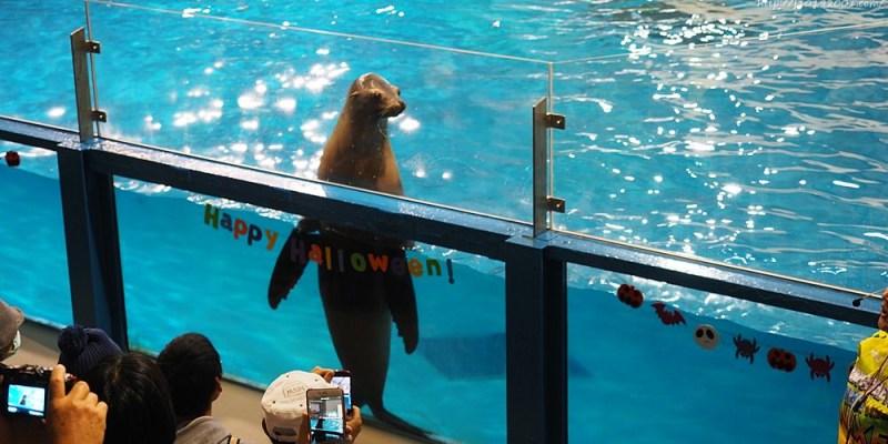 北海道景點︱登別尼克斯海洋公園 海獅表演 企鵝遊行