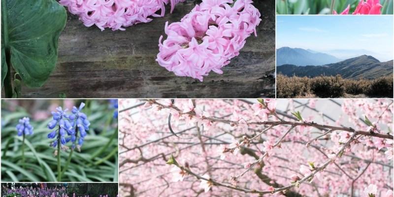 南投景點︱『合歡山』當雪結成冰,除了好拍之外還有難忘的感動,『梅峰農場-台灣大學山地實驗農場』一大片桃花林,欣賞百花爭妍