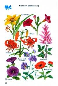 Атлас определитель От земли до неба. Растения цветника