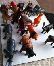 go on an animal safari