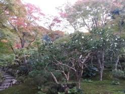 Garden in Nara