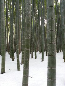 Winter in Bamboo Forest