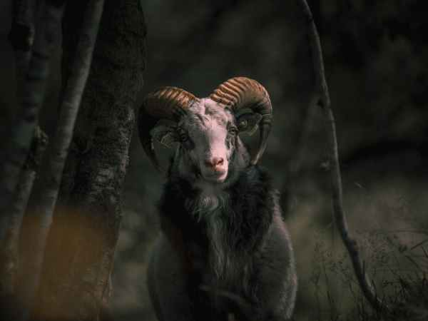 The 2020 Capricorn Goat of Fear: seething with Evil