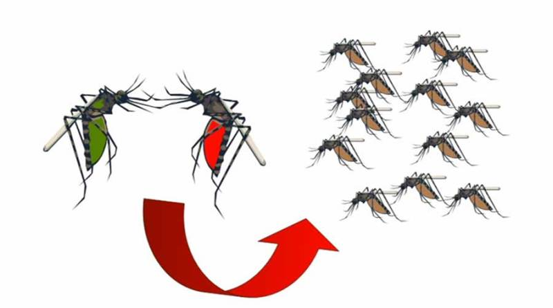 how to eliminate mosquito borne viruses