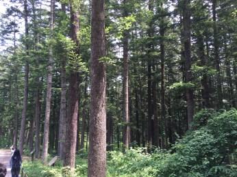 숲에서 배우다_Image 5