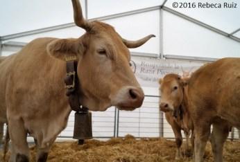 Carpas de ganado. (FOTO: Rebeca Ruiz)