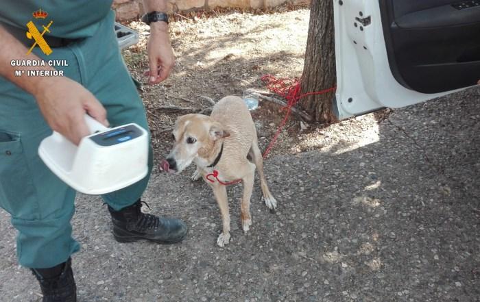 PERRO.  Auxilio a un perro en Alquézar.