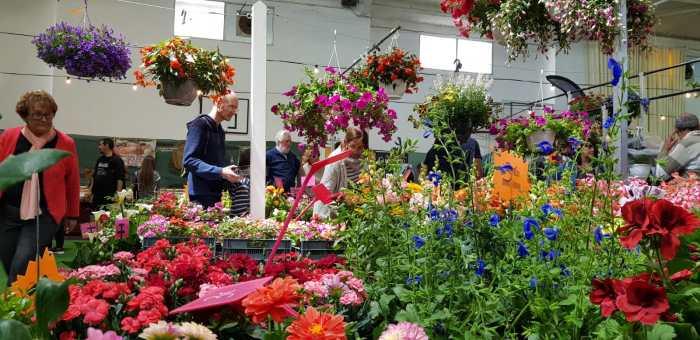 CERTAMEN. Flores y plantas en la Feria de la Primavera 2019. (FOTO: Rebeca Ruiz)