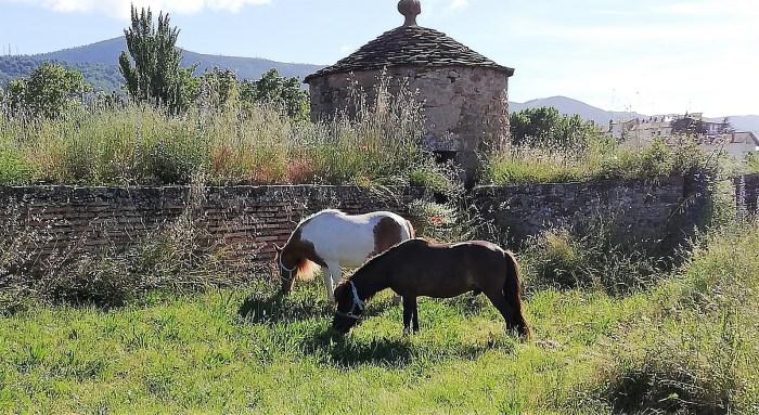 CIUDADELA DE JACA. Sam y Frodo, los ponis del Castillo de San Pedro.
