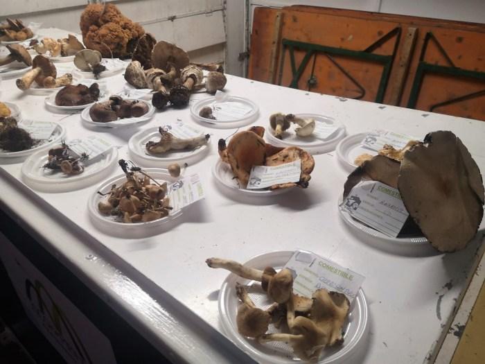 Las plazas Biscós y Ripa acogen las jornadas micológicas y la feria de setas y el mercado Jaca-Pirineos, respectivamente. (FOTO: Javi del Pueyo)