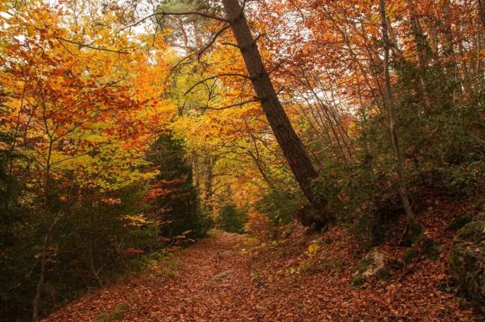 Bosque del Betato (FOTO: Carlos Jarnes)