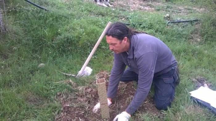 Chulio Romero, en el momento de realizar la plantación de Artosilla.