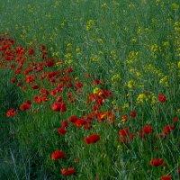 · Flores silvestres de campo