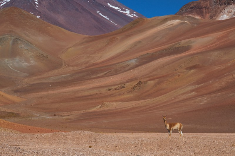 De Caleta Chanaral del Aceituno au Chili à Cafayate en Argentine