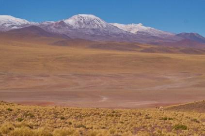 San_Pedro_De_Atacama_Piste_Paso_Sico 5