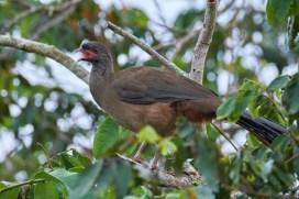 Pantanal_oiseau 2 1