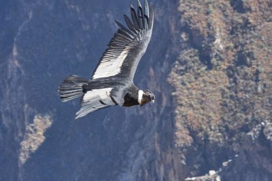 Vol au dessus du canyon