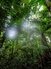 Forêt primaire du Yasuni