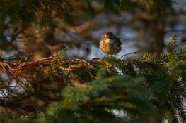 Passereau dans la forêt