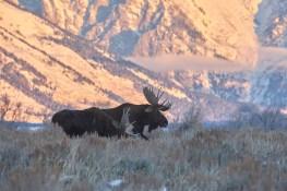 Elan au Grand Teton