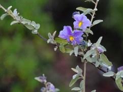 Fleur dans la vallée des cactus