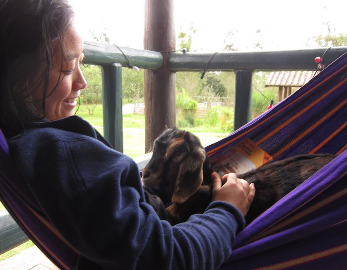 Goat and I, lounging in the hammock