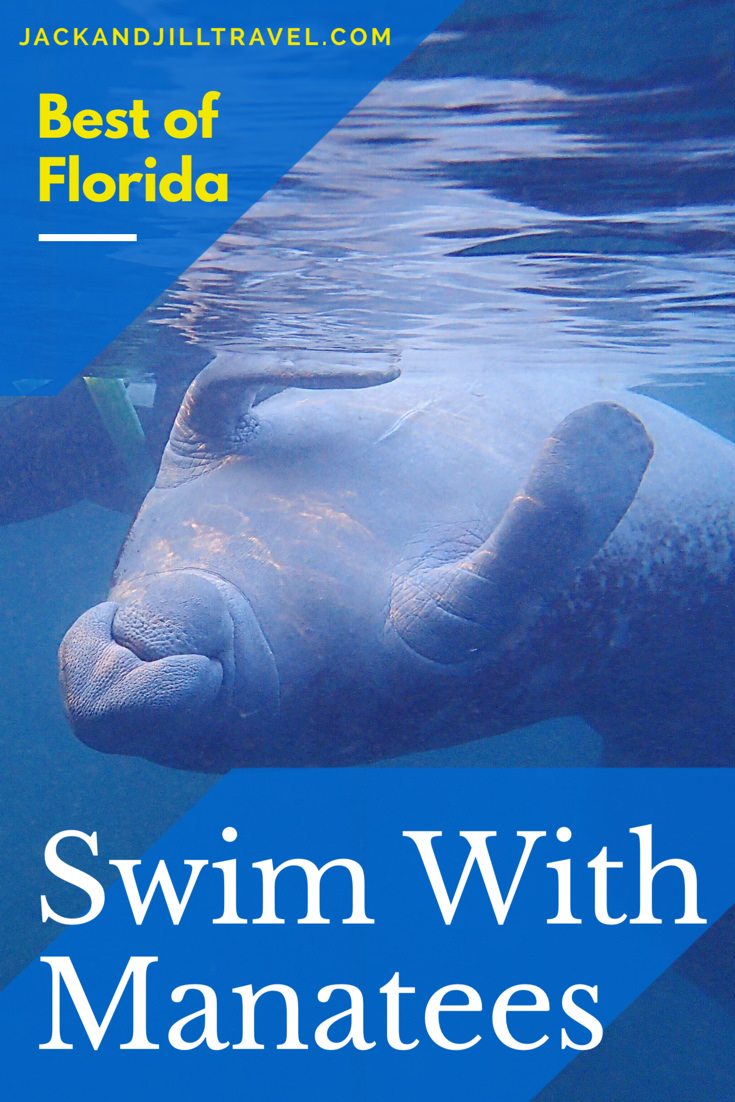 Swimming with manatees is one of the best things to do in Florida