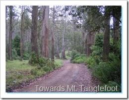 Towards Mt. Tanglefoot